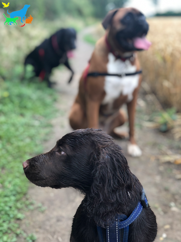 LIV for PETS Gallery Image - Dog Walking and Pet Sitting in Slip End Harpenden Caddington and Markyate
