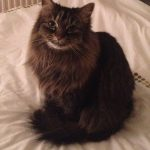 LIV for PETS Testimonial Image - Dog Walking and Pet Sitting in Slip End Harpenden Caddington and Markyate