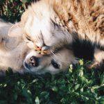 LIV for PETS - Dog Walking and Pet Sitting in Slip End Harpenden Caddington and Markyate